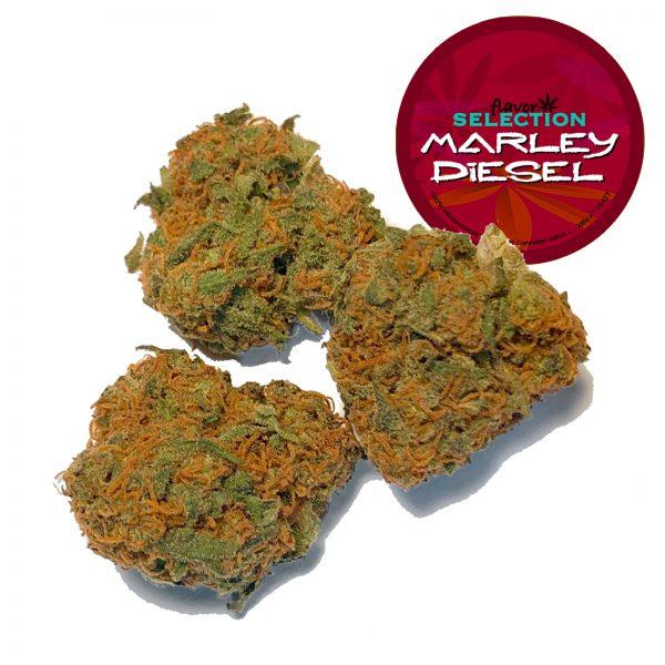 cannabis light legale marley diesel