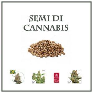semi cannabis