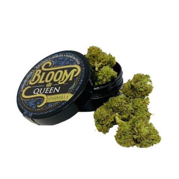 Bloom cannabis queen 600x600 - Queen - 3gr - Bloom cannabis-legale, fino-a-3-gr, cannabis-light