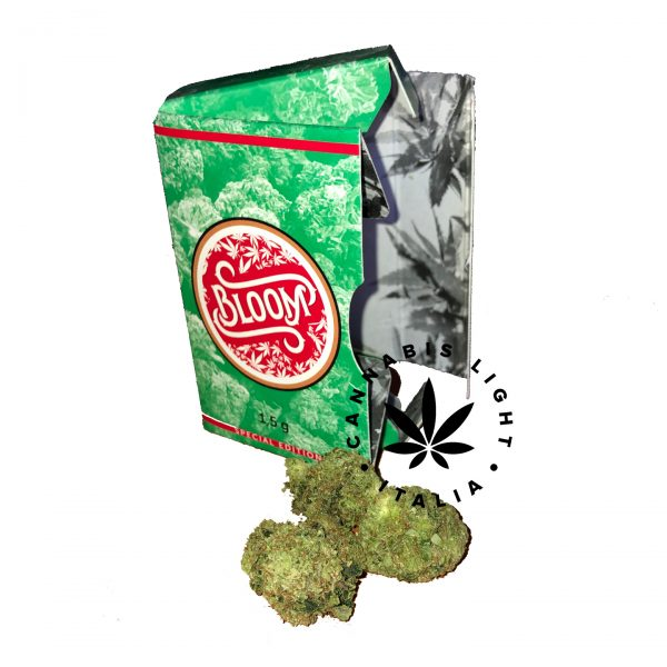 cannabis special edition bloom