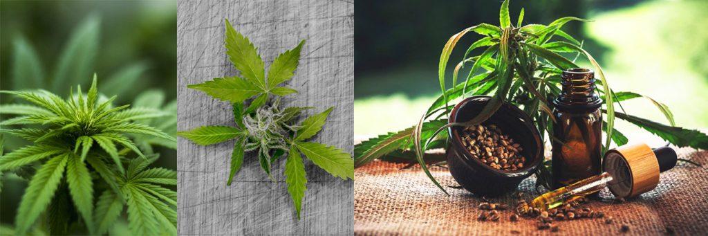 cannabis light italia