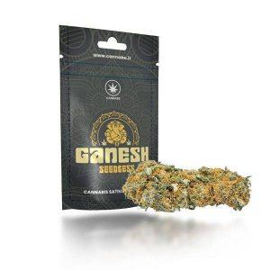 cannabis legale ganesh cbd cannabe