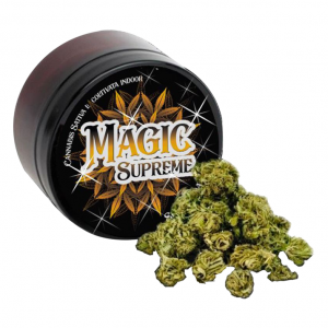 erba legale magic supreme 300x300 - TERRE DI CANNABIS