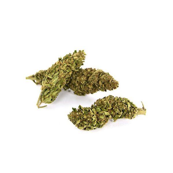 infiorescenza magic night cannabis 600x600 - Night - 5g - Magic formati-maxi, cannabis-legale, cannabis-light
