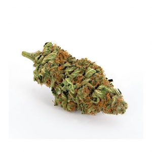 infiorescenza moonflower pura cannabis cbd 300x300 - TERRE DI CANNABIS