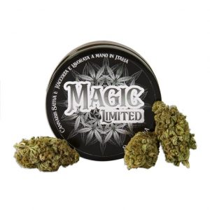 magic limited cannabis 300x300 - TERRE DI CANNABIS
