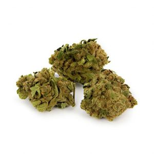 infiorescenza magic dream1 2 300x300 - TERRE DI CANNABIS