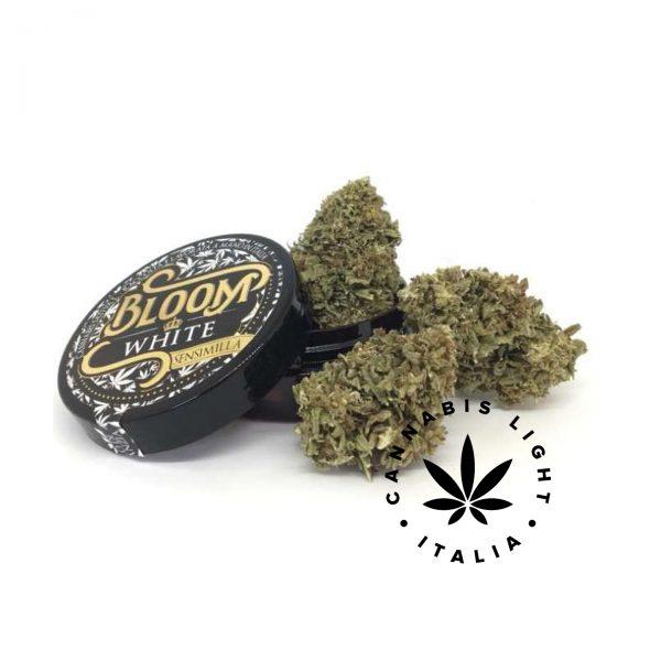 cannabis white CBD