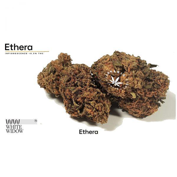 cannabis white widow ethera 600x600 - White Widow by Ethera - 5g novita, formati-maxi, cannabis-legale, cannabis-light