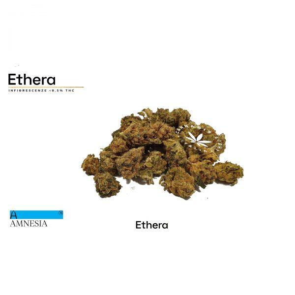 cannabis amnesia