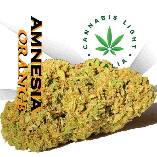 cannabis light amnesia orange cbd cannabis light italia