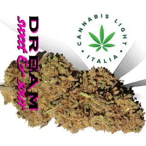 cannabis light dream cannabis light italia
