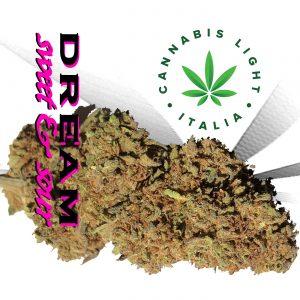 cannabis light dream cannabis light italia